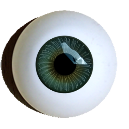 Iris-muscle-eyes-standart-offer-dark-green