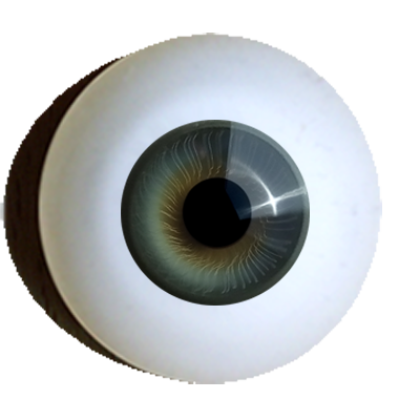 Iris-muscle-eyes-superior-grey-green.